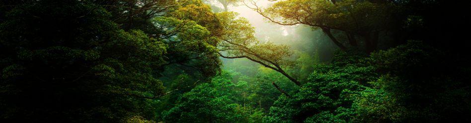 15 libros sobre el medio ambiente que debes leer